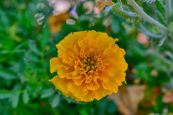 Waverly & Flower PICs 7-27-14